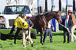 Brown Panther (GB)(4) with Jockey Richard Kingscote aboard were scratched after Brown Panther bolted prior to the race throwing Kingscote at the Pattison Canadian International Stakes at Woodbine Race Course in Toronto, Canada on October 19, 2014.