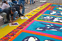 Antigua, Guatemala. Finalizing a stenciled butterfly on an alfombra (carpet) of colored sawdust depicting environmental themes decorating  the street in front of La Merced Church in advance of the passage of a children's procession during Holy Week, La Semana Santa.  The alfombra will only be finished an hour or two before the procession walks over it, after which it will be swept away by municipal street cleaners.