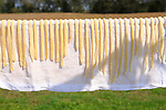 Heritage Days Festival. Union County. Noodles drying.