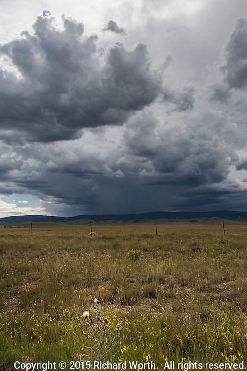 Threatening storm clouds cast dark shadows on the grasslands below - in the foreground, white blossoms on a thistle plant stand out against the green and yellow grasses.