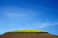 Canola and tilled soil. Palouse region, Whitman County, WA.