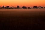 Savanna at sunrise, Kafue National Park, Zambia