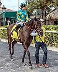 HALLANDALE BEACH, FL - Photo of Luca Panici taken February 10, 2016 at Gulfstream Park in Hallandale Beach, FL. (Photo by Bob Aaron/Eclipse Sportswire/Getty Images)