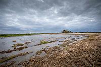 Flooded stubble field following heavy rainfall