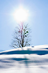 Austria, Styria, Styrian Salzkammergut, Altausseerland, community Altaussee, winter scenery