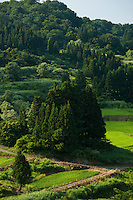 Cedar trees and rice paddies are both stunningly green in Japan's snow country summer landscape.