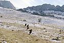 Irak 2000.Peshmergas du KDP dans le Badinan.Iraq 2000.Patrol of peshmergas in Badinan