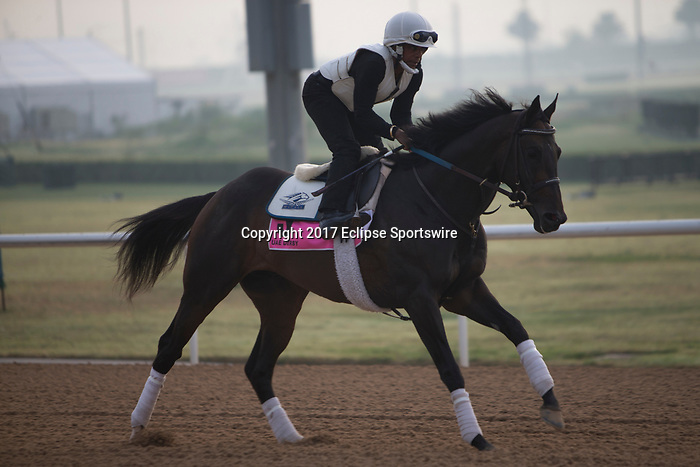 DUBAI,UNITED ARAB EMIRATES-MARCH 23: Vettri Kin,trained by Kenny McPeek,exercises in preparation for the UAE Derby at Meydan Racecourse on March 23,2017 in Dubai,United Arab Emirates (Photo by Kaz Ishida/Eclipse Sportswire/Getty Images)