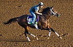 October 27, 2014:  Sayaad, trained by Kiaran McLaughlin, exercises in preparation for the Breeders' Cup Mile at Santa Anita Race Course in Arcadia, California on October 27, 2014. John Voorhees/ESW/CSM