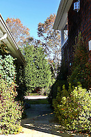 yard with plants