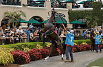 DEL MAR, CA  SEPTEMBER 3: #1 Cause She's a Lady, acts up in the paddock before the Generous Portion Stakes on September 3, 2021 at Del Mar Thoroughbred Club in Del Mar, CA.  (Photo by Casey Phillips/Eclipse Sportswire/CSM)