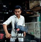 August 2000. Jakarta, Indonesia. A Black parrot from Indonesia's islands is for sale on Jalan Balito in Jakarta. The parrot is endangered and since Suhartos downfall the endangered animal business has proliferated because of government corruption and inability to police the industry
