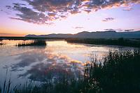 Maverick Springs Range<br />    from East Sump, Ruby Marsh<br /> Ruby Lake National Wildlife Refuge<br /> Great Basin,  Nevada