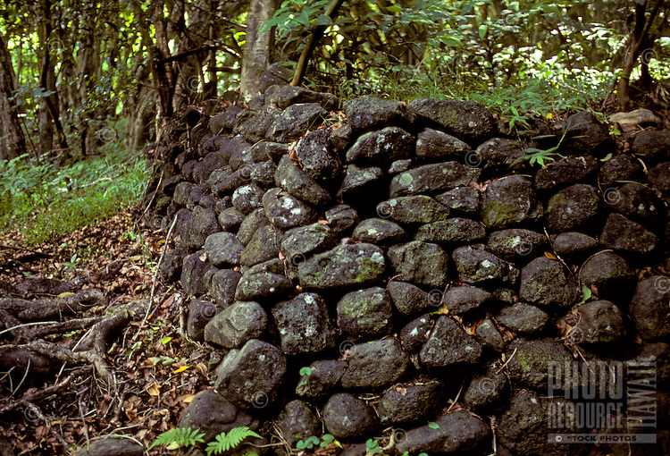 An ancient rock wall in Halawa Valley on Molokai, used by the ancient Hawaiians as an enclosure for taro crops, a staple starch food of Polynesian people.
