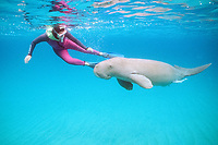 snorkeler & dugong or sea cow, Dugong dugon, Tanna Is., Vanuatu (S. Pacific Ocean)
