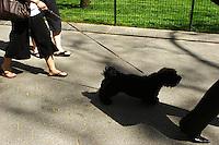 Madison Square Park; 338pm, 20April2006