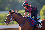 SHA TIN,HONG KONG-DECEMBER 09: Big Orange,trained by Michael Bell,exercises in preparation for the Hong Kong Vase at Sha Tin Racecourse on December 9,2016 in Sha Tin,New Territories,Hong Kong (Photo by Kaz Ishida/Eclipse Sportswire/Getty Images)