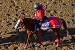 November 3, 2020: Pingxiang, trained by trainer Hideyuki Mori, exercises in preparation for the Breeders' Cup Dirt Mile at Keeneland Racetrack in Lexington, Kentucky on November 3, 2020. John Voorhees/Eclipse Sportswire/Breeders Cup/CSM