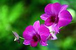 Two purple flowers in bloom