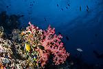 Rainbow reef w Damsels
