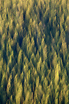 Abstract impressionistic view of forest