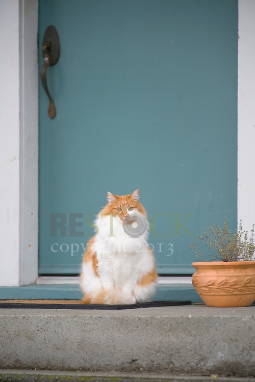 Cat in front of Blue Door