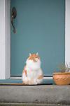 Cat in front of Blue Door