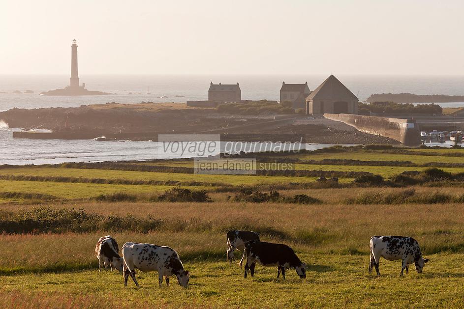Europe/France/Normandie/Basse-Normandie/50/Manche/Presqu'île de la Hague/Goury: le port  et le phare du Cap de la Hague  et vaches normandes en paturage