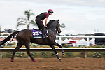 DEL MAR, CA - NOVEMBER 02: Seventh Heaven, owned by Derrick Smith, Mrs. John Magnier & Michael Tabor and trained by Aidan P. O'Brien, exercises in preparation for Longines Breeders' Cup Turf at Del Mar Thoroughbred Club on November 2, 2017 in Del Mar, California. (Photo by Jamey Price/Eclipse Sportswire/Breeders Cup)