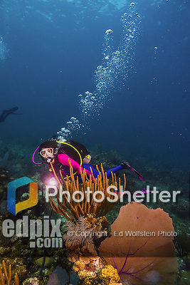 11 June 2014: SCUBA diver Sally Herschorn swims by a Venus Sea Fan (Gorgonia flabellum) while exploring the reef scenery at Lemon Reef, on the North Shore of Grand Cayman Island. Located in the British West Indies in the Caribbean, the Cayman Islands are renowned for excellent scuba diving, snorkeling, beaches and banking.  Mandatory Credit: Ed Wolfstein Photo *** RAW (NEF) Image File Available ***