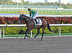 06 February 2010:  Yate's Black cat with jockey Kent Desormeaux in the The Gulfstream Park Handicapp Stakes the Ninth race at Gulfstream Park in Hallandale Beach, FL.
