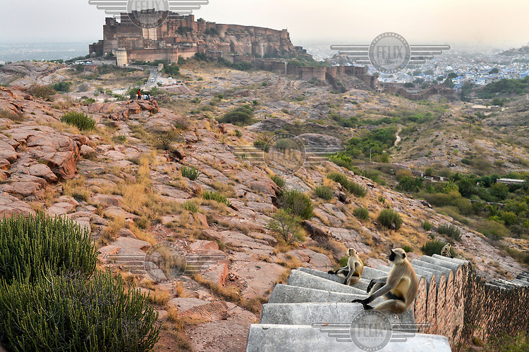 Monkeys on part of the fortifications that ring Mehrangarh Fort/Palace.