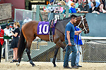 HOT SPRINGS, AR - MARCH 17: #10 Combatant . Rebel Stakes at Oaklawn Park on March 17, 2018 in Hot Springs, Arkansas. (Photo by Ted McClenning/Eclipse Sportswire/Getty Images)