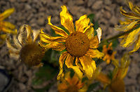 Photograph of the beautiful fall colours of the last days of the Daisy.
