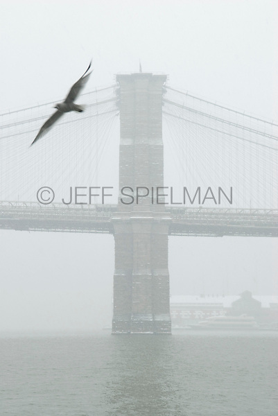 AVAILABLE FROM JEFF AS A FINE ART PRINT.<br /> <br /> AVAILABLE FROM GETTY IMAGES FOR COMMERCIAL AND EDITORIAL LICENSING.  Please go to www.gettyimages.com and search for image # 84379793.<br /> <br /> Brooklyn Bridge and East River Viewed from East River Esplanade During a Snowstorm, Seagull Flying in the Foreground, Lower Manhattan, New York City, New York State, USA