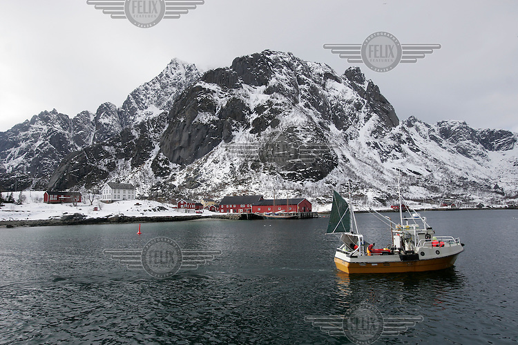 Fishing boat approaching shore. Cod fishing is a traditional practice in Lofoten, home to around 24,500 people and and an area where locals have been producing Stockfish for over 1000 years. Lofoten is where the World's largest and last cod stocks are found, in the Barent's Sea. Fishing is as strong an industry as tourism in this region.