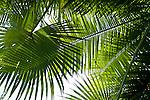 Palms in Costa Rica