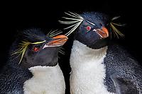 Antarctica - Kerguelen