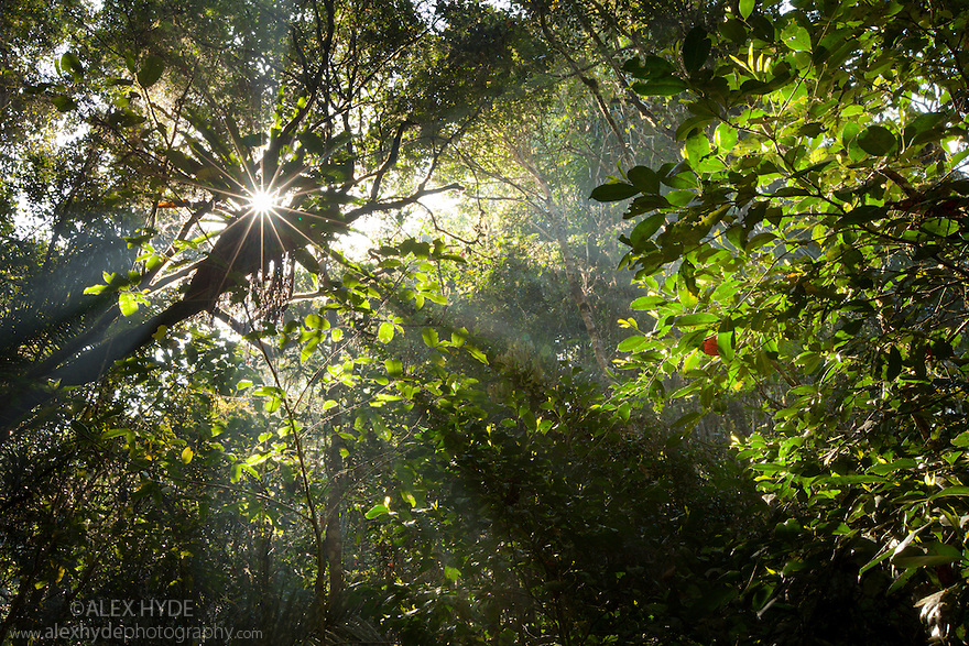 Early morning sun creating sunbeams through the humid rainforest canopy, Andasibe-Mantadia National Park, Madagascar.
