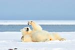 Philippe Ricordel's close up shots of a polar bear. Photos via Naturagency