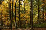 DEU, Deutschland, Bayern, Niederbayern, Naturpark Bayerischer Wald, Herbstlandschaft, Wald | DEU, Germany, Bavaria, Lower-Bavaria, Nature Park Bavarian Forest, autumn landscape, wood, forest