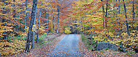Autumn on Lake Road to Lower Ausable Lake in the town of Keene Valley in the High Peaks Region of New York State's Adirondack Park.