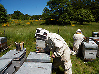 Inspection of a mountain apiary and notes on the roof of the hives for sanitary monitoring of the colony.<br /> Inspection sur un rucher de montagne et notes sur le toit de la ruche pour le suivi sanitaire de la colonie.