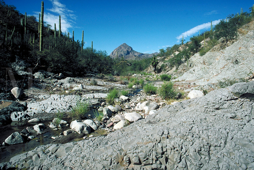 Spring fed river makes it way down an arroyo. Baja California, Sur Mexico San Javier.