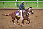 October 26, 2015 :  I'm a Chatterbox, trained by J. Larry Jones and owned by Fletcher and Carolyn Gray, exercises in preparation for the Longines Breeders' Cup Distaff at Keeneland Race Track in Lexington, Kentucky on October 26, 2015. Scott Serio/ESW/CSM