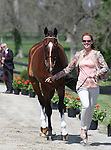April 22, 2015: Selena O'Hanlon and #12 Foxwood High at the Rolex Three Day Event first horse inspection.  Candice Chavez/ESW/CSM
