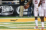 A wild squirrel runs on the field during the game between the Oklahoma Sooners and the Baylor Bears at the Floyd Casey Stadium in Waco, Texas. Baylor defeats OU 41 to 12.