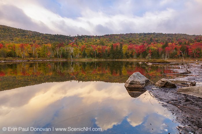 Zealand Pond in Bethlehem, New Hampshire USA on a foggy autumn morning. This pond is located on the side of the Zealand Trail. The reds dominated the landscape the year this image was created.