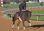 November 4, 2020: Civil Union, trained by trainer Claude R. McGaughey III, exercises in preparation for the Breeders' Cup Filly & Mare Turf at  Keeneland Racetrack in Lexington, Kentucky on November 4, 2020. Jessica Morgan/Eclipse Sportswire/Breeders Cup: