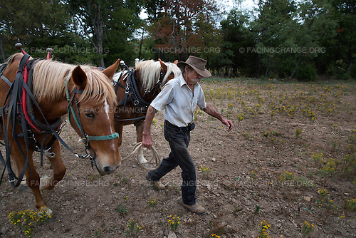 Madison County, Arkansas <br /> Richard Courteau uses his neighbor's old, experienced mare, left, to train her green partner to work in harness.